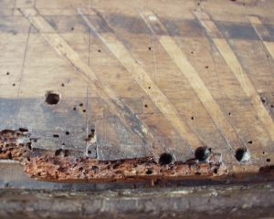 The toeboard of a sixteenth century windchest, severely damaged by woodworms.
